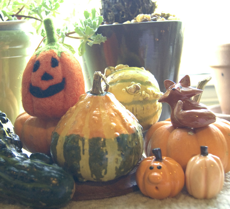 gourds pumpkins and foxes