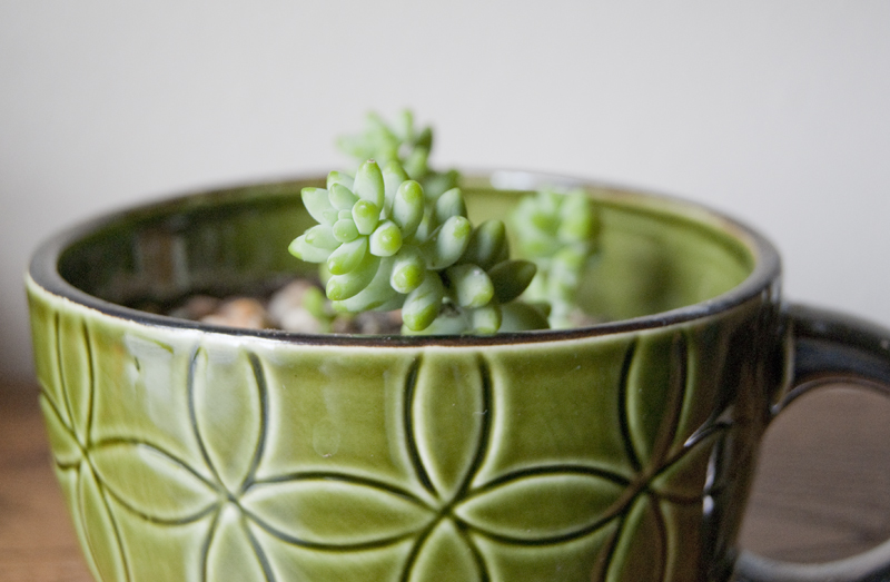 green succulent in teacup