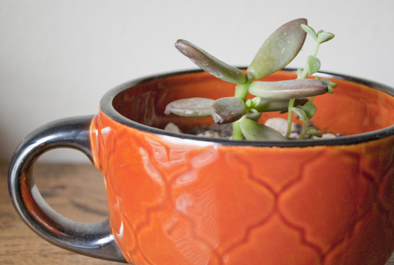 green succulent in orange teacup